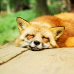 Firefoxの設定方法や使い方は?アドオンのインストール手順まとめ